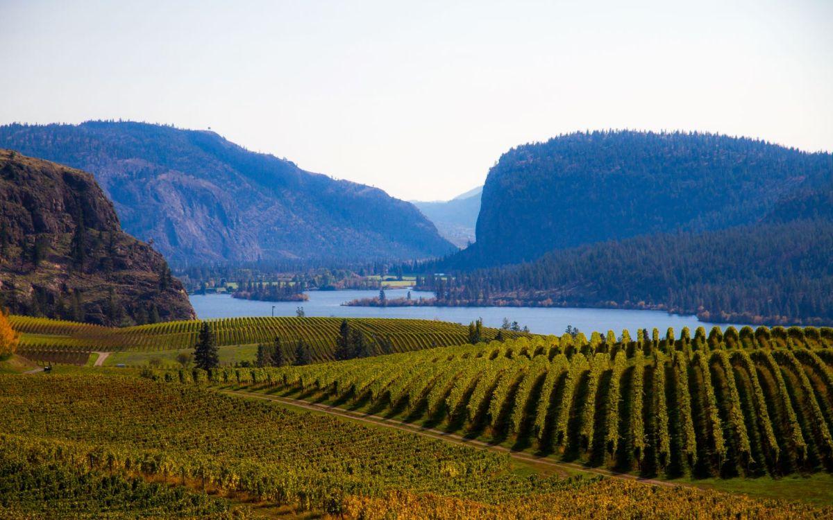 Oliver Canada's Wine Capital
