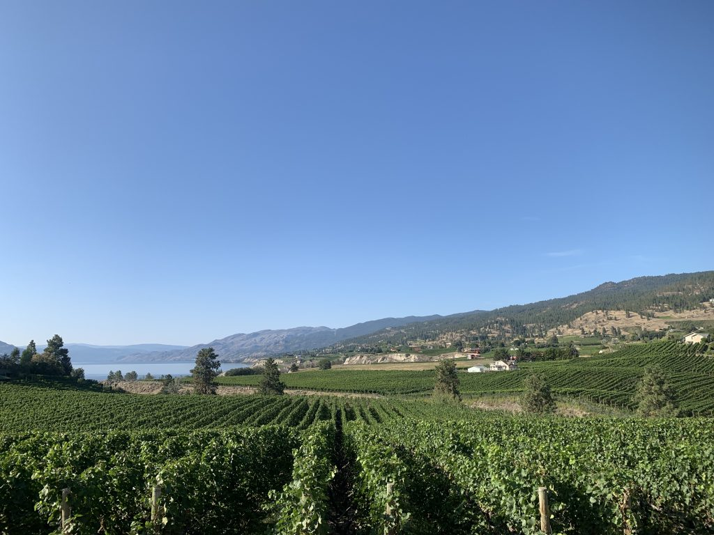 VInyards in Penticton from the KVR Trail